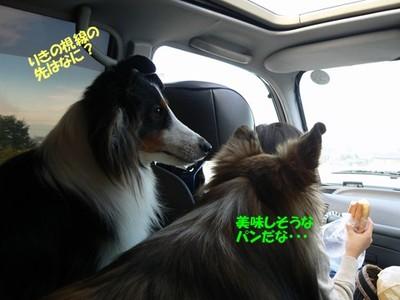 Miyougi_car4